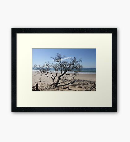 Battered But Still Grounded Framed Print