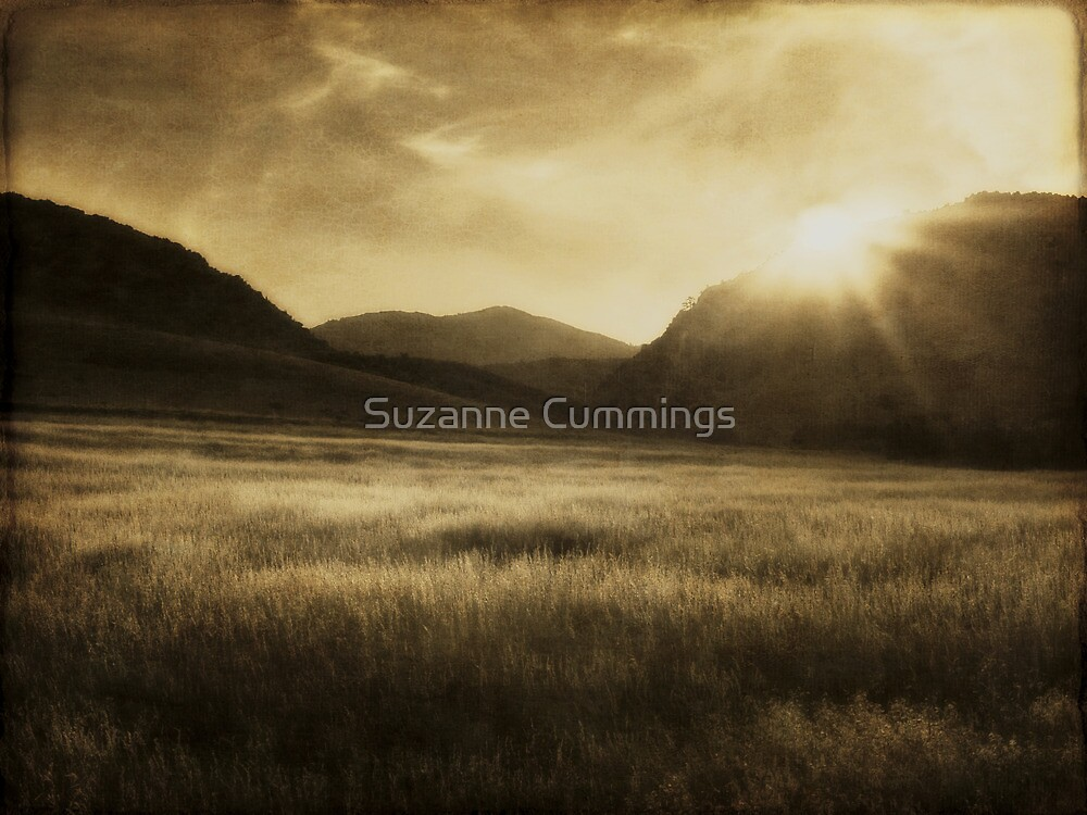 Sea of Grass by Suzanne Cummings