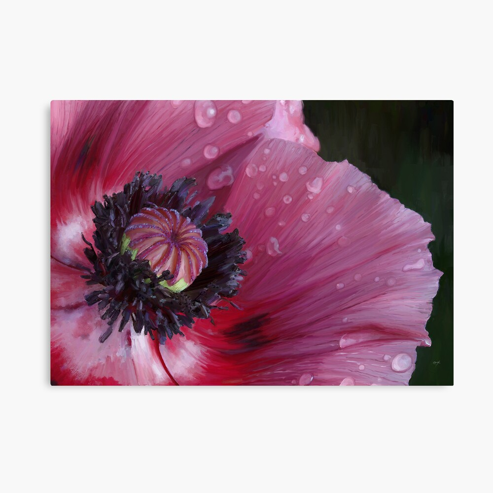 Three flowers: Red - The poppy weeps Canvas Print