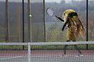 Beeforehand by Susan Littlefield