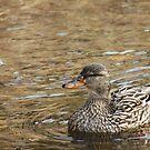 Duck by Thomas Murphy