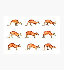 Red Kangaroo in Motion Photographic Print