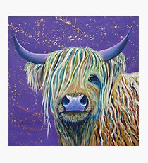 Woolly Bully (Cow) Photographic Print