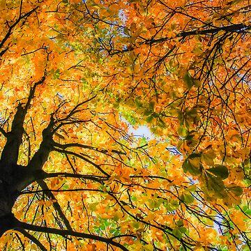 autumn sky by hannes61