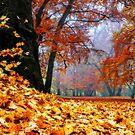 magical autumn by hannes cmarits