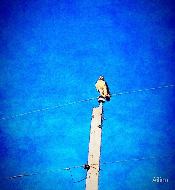 Hunting Hawk by Ailinn
