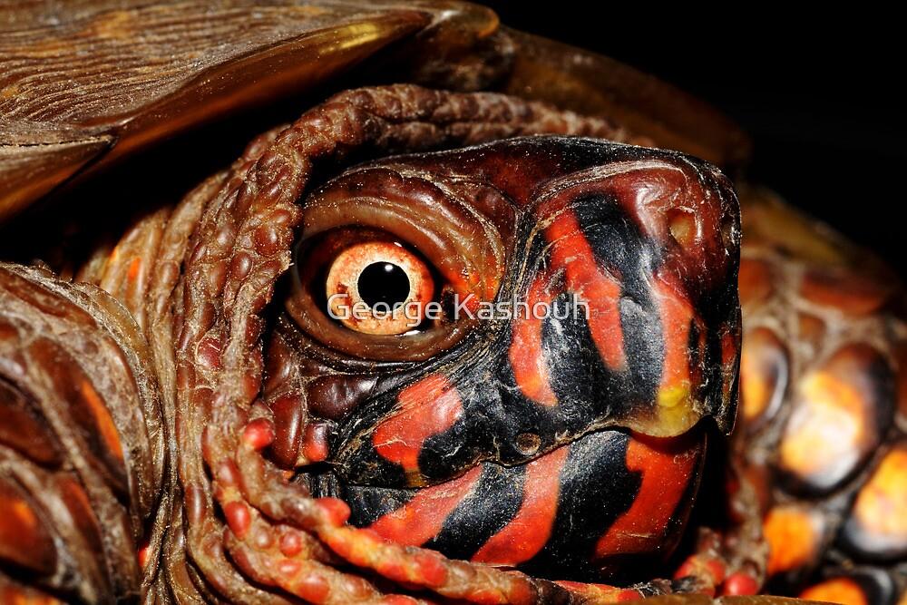 Darth Maul Turtle by George Kashouh