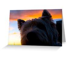 Westie sunset Greeting Card