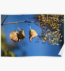 Fall Leaf Bokeh Poster