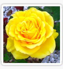 Golden Yellow Rose with Garden Background Sticker