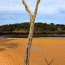 Beach driftwood - Inverloch HDR Series by Jackson  McCarthy