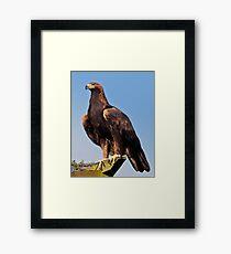 Claws (Golden Eagle) Framed Print