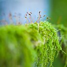Moss by Alina Uritskaya