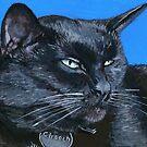Basking Chooch the Cat by bernzweig