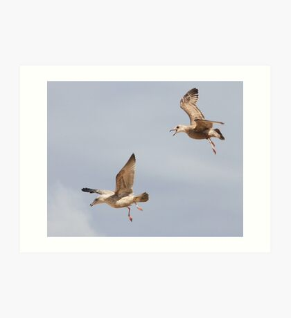 Gull Games ~ Art Print