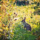 Wild Rabbit by Vicki Field