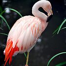 Flamingo by Robert Goulet