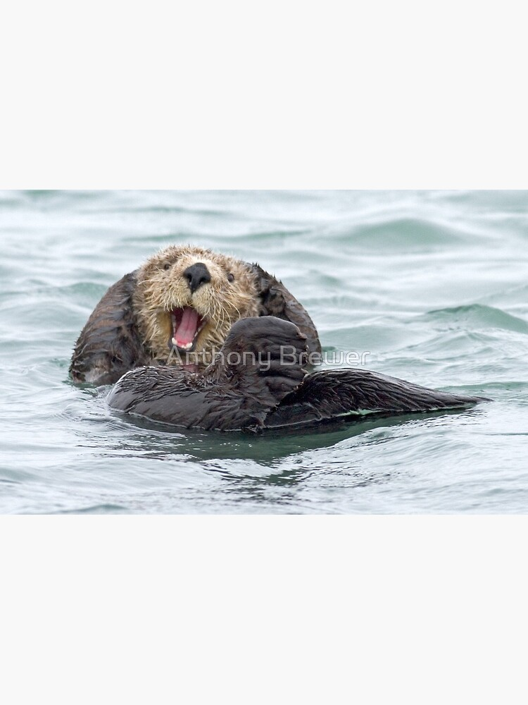 Happiness is a wet otter by dailyanimals
