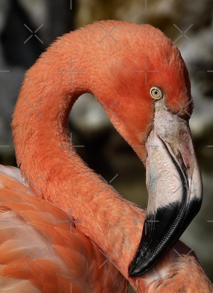 Flamingo by Yampimon