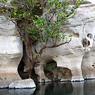 Elephant profile of Geikie Gorge National Park, W.A. by DianneLac
