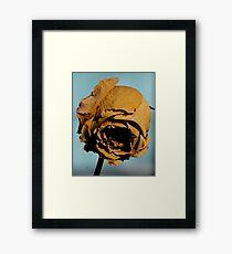 Golden Years Framed Print