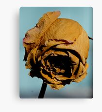 Golden Years Canvas Print