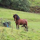 Posing Pony by Abigail Jennings
