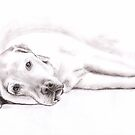 Tired Labrador Retriever by Nicole Zeug