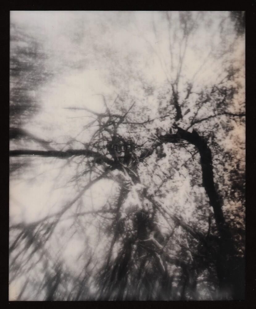 Nest by Jill Auville