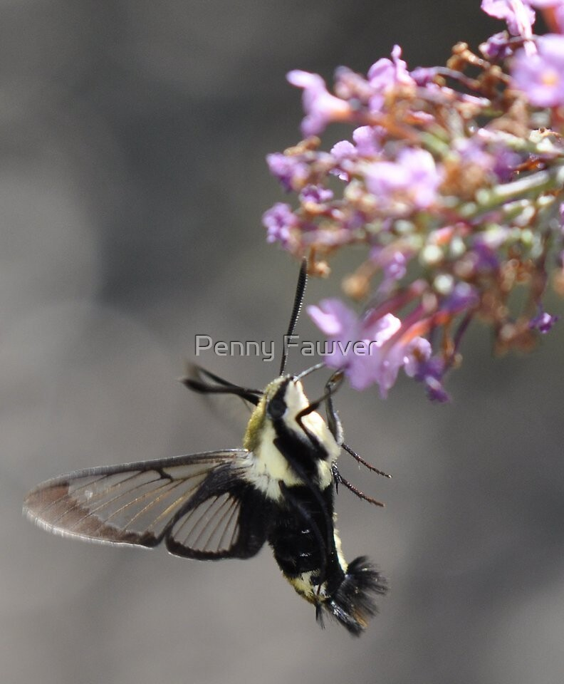 flowers and hummingbird moth by Penny Rinker