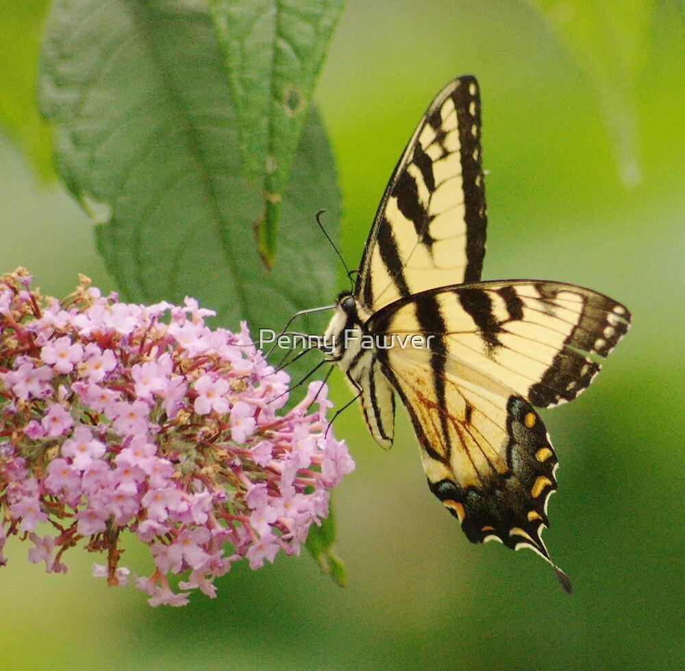butterflies by Penny Rinker
