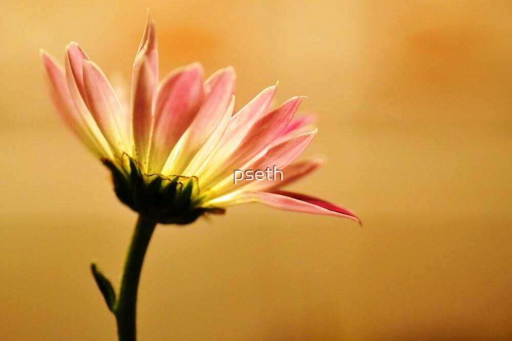 Flower in Summer Sunshine by pseth