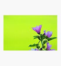 Summer Wallpaper Photographic Print