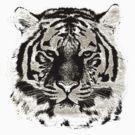 Tiger Face Close-up by Nhan Ngo