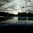 As evening falls © by Dawn Becker