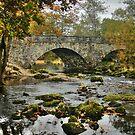 Bridge in Lake District, England by Jennifer Standing