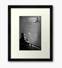 Seal awe Framed Print