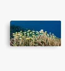 School of fish on coral reef Canvas Print
