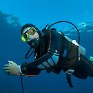 The dive guide by Stephen Colquitt