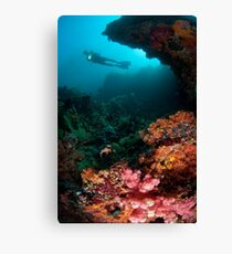 Diver in coral garden Canvas Print