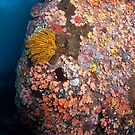 Ornate undersea boulder  by Stephen Colquitt