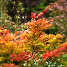 The Colour Changes in Autumn by Matt Sillence
