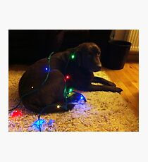 Christmas Canine Photographic Print