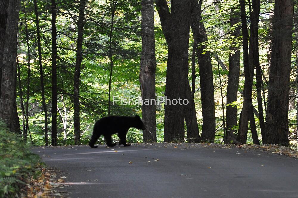 Bear Cub by FishmanPhoto