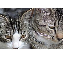 Arthur and Zaphod Just Hangin' Photographic Print