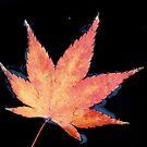 rainy autumn by yvesrossetti