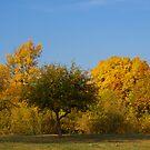 Fall Comes to Dunham Park by Scott Hendricks
