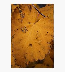 Big Yellow Leaf Photographic Print
