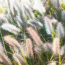 Morning Light on the Greens by Liza Williams