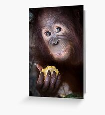 SAVE Orangutan Greeting Card